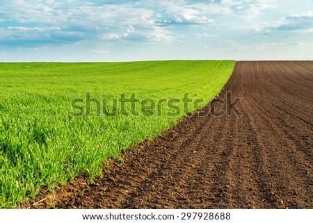 Green wheat field #297928688