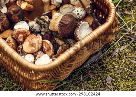 Wicker basket full of wild mushrooms (mainly of ceps/porcini) standing on the moss in the woods #298102424