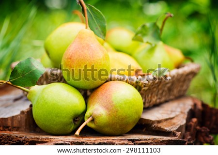 Healthy Organic Pears in the Basket. Royalty-Free Stock Photo #298111103