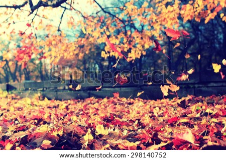 background texture of yellow leaves autumn leaf background #298140752