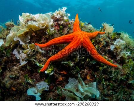 Starfish and sponge of the Mediterranean Sea.  Royalty-Free Stock Photo #298260929