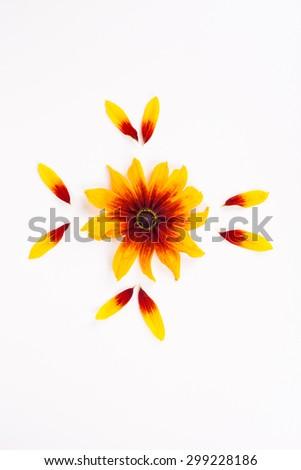 rudbeckia on white background #299228186