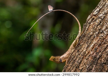Butterfly on tail of a lizard. #299817992