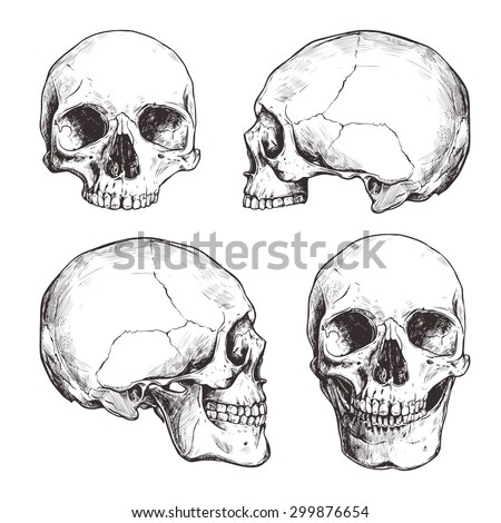 Collection Of Hand Drawn Skulls In Monochrome. Vector Skulls Illustrations