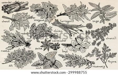 herbs, anice,basil, chervil, chives, cilantro, cinnamone, coriander, dill, mint, oregano, parsley, rosemary, rucola, rocket, sage, tarragon, thyme on vintage backgrounde #299988755