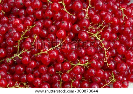 Background from from ripe fresh  redcurrants close-up  #300870044