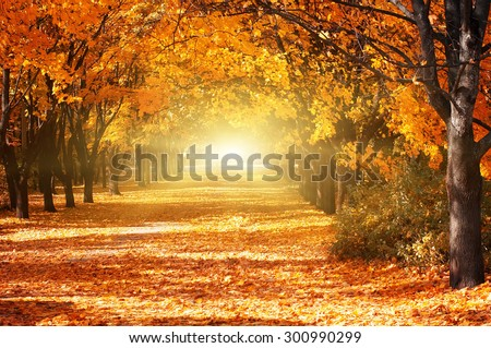 Beautiful romantic alley in a park with colorful trees and sunlight. autumn natural background #300990299