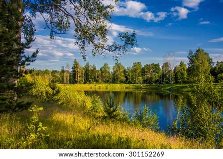 woodland scenery  #301152269