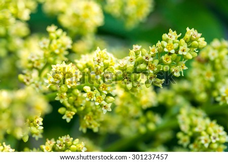 A closeup of yellow blooming flowers in a garden. #301237457