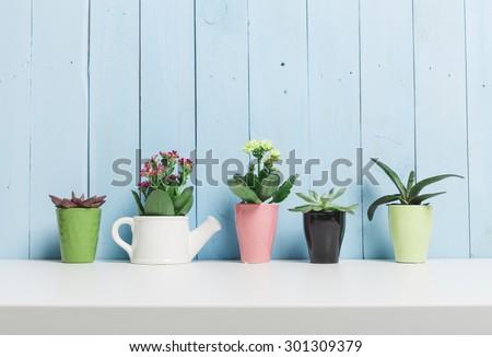 House plants. Succulents #301309379
