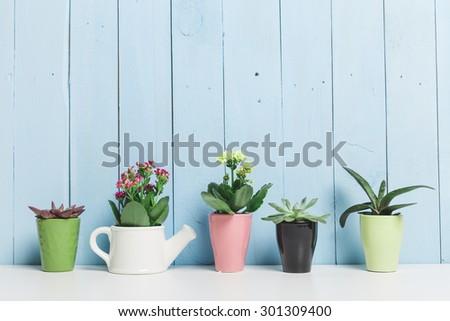House plants. Succulents #301309400
