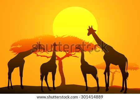 giraffes at Sunset  #301414889