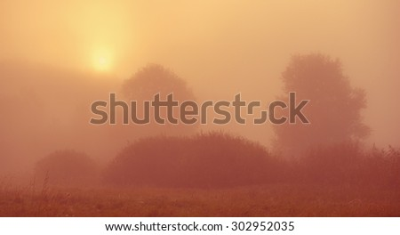 Landscape with trees in the mist in the countryside, autumn season #302952035