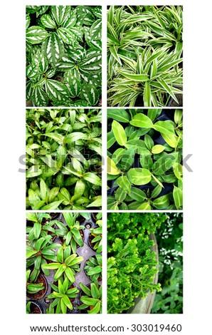 Ornamental plants set #303019460