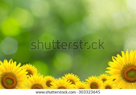 Sunflower Background for presentation