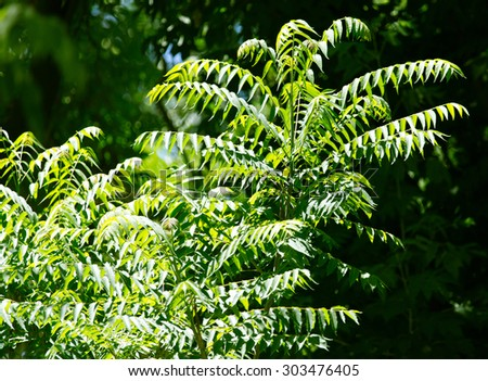 green leaves on the branches of a tree in nature #303476405