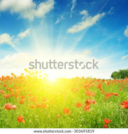 field with poppies and sun on blue sky #303695819