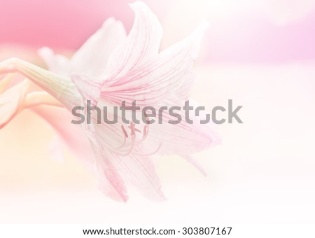 pink lily flower Made with blur style for background #303807167