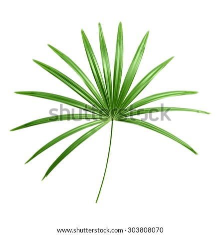 Green leaf isolated on white background #303808070