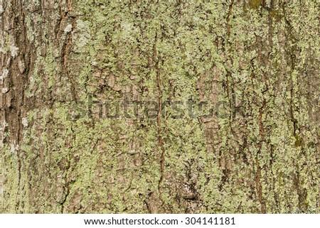 tree Bark texture background pattern #304141181