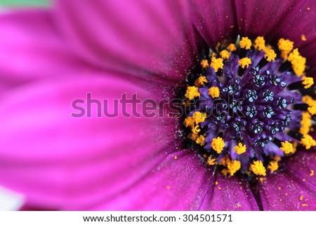 purple flower #304501571