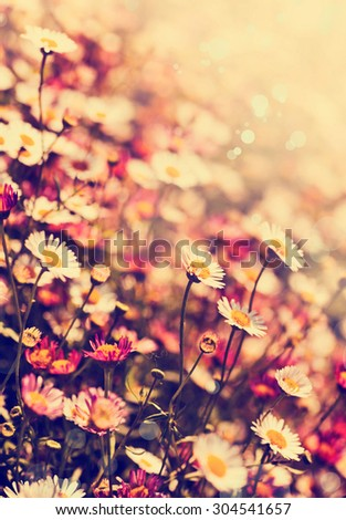 White chamomile flowers in the nature, meadow of flowers, spring floral landscape #304541657