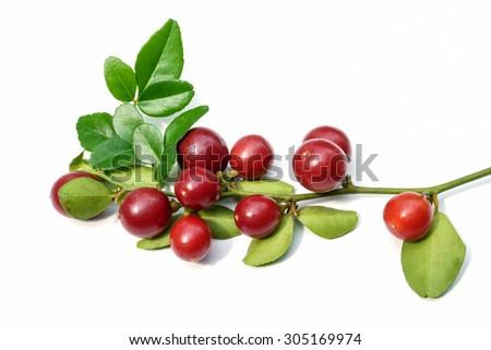 Super fruit, Scientific name Carissa carandas Linn. #305169974