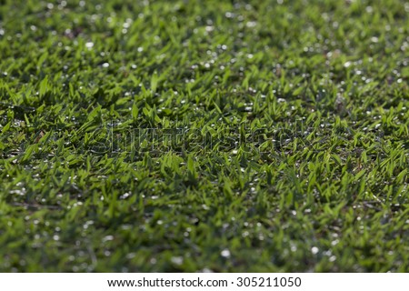 Depth of field - Green grass field. #305211050