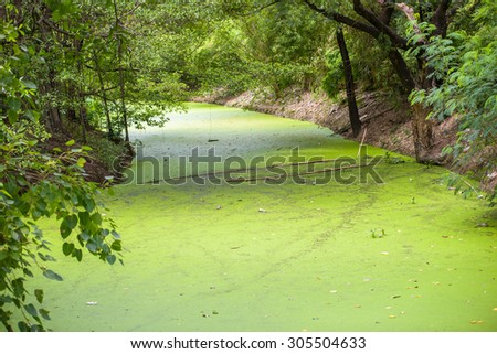 green nature texture background #305504633