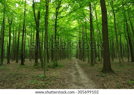 Trees in a green forest  #305699102
