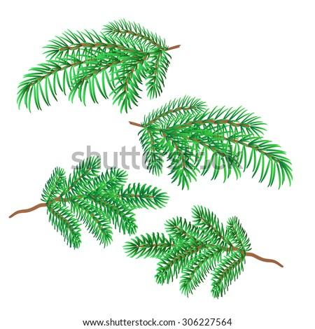 Sprigs of spruce christmas decorations symbol celebration vector illustration  #306227564