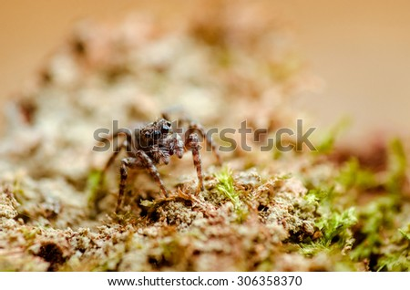 Portrait of the jumping spider. Russian nature #306358370