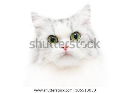 Unusual close-up cat portrait, white background, shallow DOF #306513050