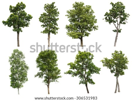Collection of isolated tree on white background #306531983