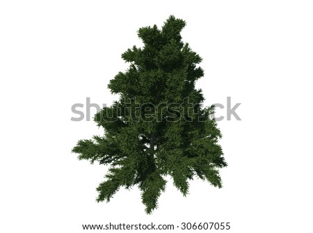 Tree bird eye view iSolated Collection #306607055