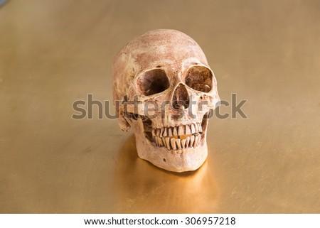 still life skull head with golden background  #306957218