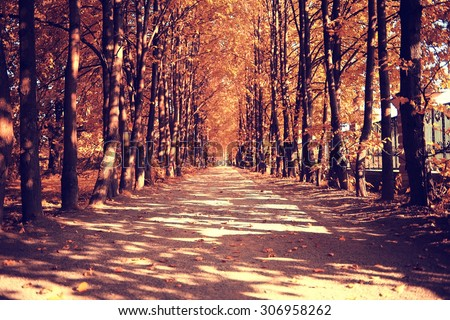The path in the autumn forest Royalty-Free Stock Photo #306958262