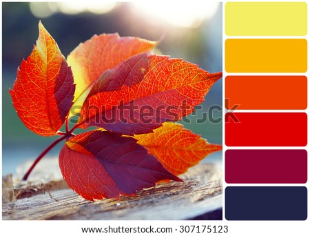 Beautiful autumn leaf on stump and palette of colors #307175123