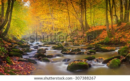 Landscape mountain river in autumn forest at sunlight. Fast jet of water at slow shutter speeds give a beautiful magic effect.   #307388267