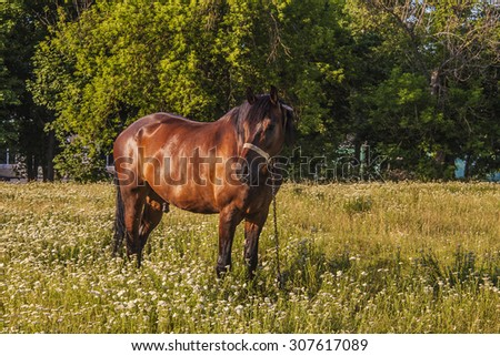 brown horse on a background of green field #307617089