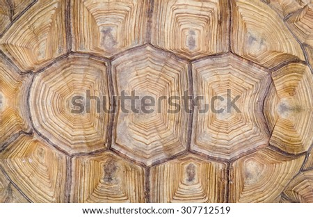 turtle's back background texture