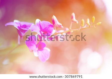 beautiful flowers with Soft Focus Color Filtered background #307869791