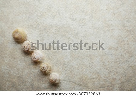 Marine shells on vintage background - copy space. #307932863