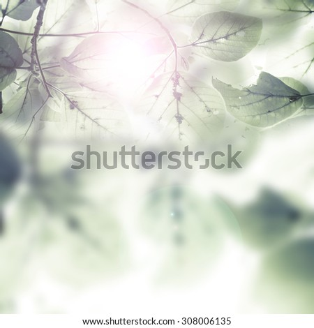 Beautiful  leaves over blurred  background, sun light, spring season, abstract natural border #308006135