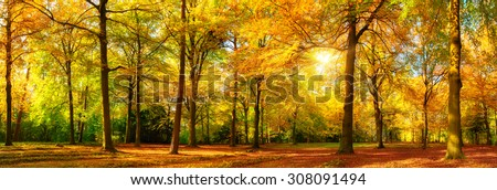 Gorgeous autumn landscape panorama of a scenic forest with lots of warm sunshine #308091494