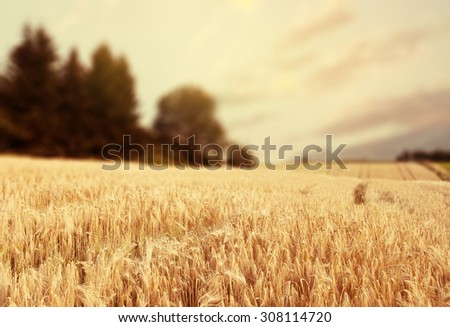 Norway summer Landscape with Wheat Field and Clouds #308114720