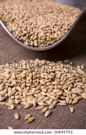 Palt malt barley, an ingredient for beer. #30849793