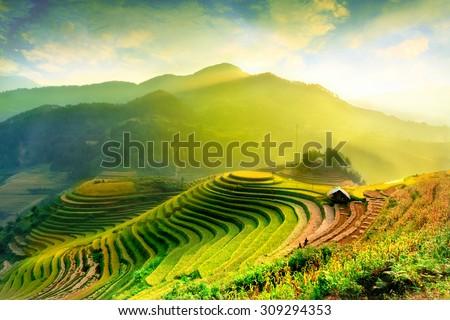 Rice fields on terraced of Mu Cang Chai, YenBai, Vietnam. Vietnam landscapes. Royalty-Free Stock Photo #309294353