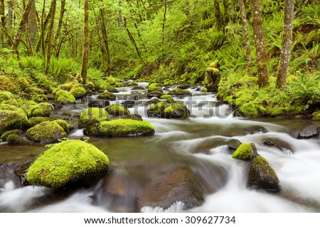 Gorton Creek through lush rainforest in the Columbia River Gorge, Oregon, USA.