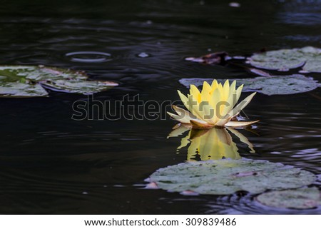 Water Lily #309839486